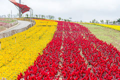 Colorful flower field Royalty Free Stock Images