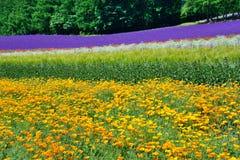 Colorful flower field, Hokkaido, Japan Royalty Free Stock Image
