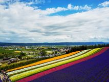 Colorful flower field, Hokkaido, Japan Royalty Free Stock Photos
