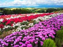Colorful flower field, Hokkaido, Japan. Irodori field, Tomita farm, Furano, Japan. It is the famous and beautiful flower fields in Hokkaido stock images