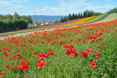 Colorful flower field. Irodori field of Tomita farm, Nakafurano, Hokkaido, Japan Royalty Free Stock Photos