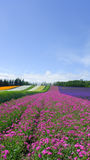 Colorful flower field Stock Photo