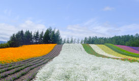 Colorful flower field Royalty Free Stock Photos