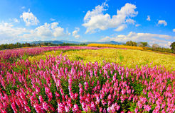 Colorful flower field over blue sky. Royalty Free Stock Photos