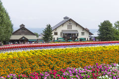 Colorful flower fields of Tomita farm, Furano, Hokkaido Stock Images
