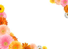 Colorful flower frame. Bright colored gerbera flowers on a white background stock photo