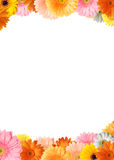 Colorful flower frame. Bright colored gerbera flowers on a white background stock image