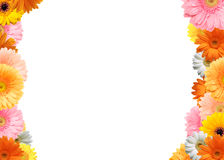 Colorful flower frame. Bright colored gerbera flowers on a white background stock photography