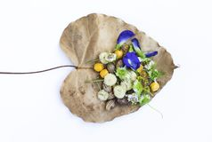 Colorful flower and fruits on dry leaf. Isolate on white background royalty free stock images