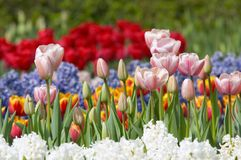 Colorful flower garden Royalty Free Stock Image