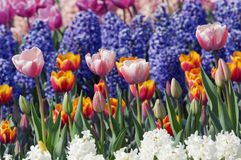 Colorful flower garden Stock Photography