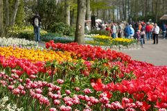 Colorful flower garden Stock Photos