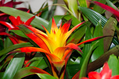 Colorful Flower. A colorful flower in a garden Stock Photos