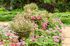 Colorful flower in garden Stock Images