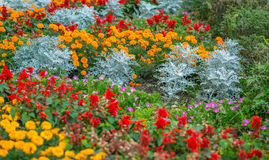 Colorful flower garden. Stock Image
