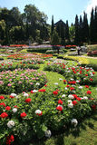 Colorful flower garden in Mae Fah Luang, Chiang Rai, Thailand Stock Image