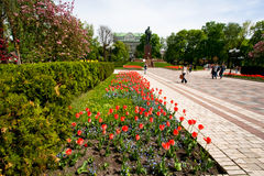 Colorful flower garden in the park Royalty Free Stock Images