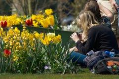Colorful flower garden in spri Stock Photo