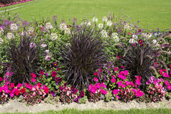 Colorful flower garden with various flowers Royalty Free Stock Images