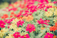 Colorful Flower in the garden Stock Images