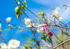 Colorful flower and green leafs shining under blue sky stock images