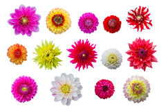 Colorful flower heads Royalty Free Stock Photography