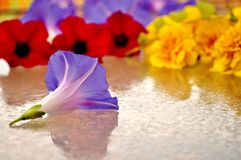 Colorful flower heads on a wet glass. Copy space. Royalty Free Stock Photo