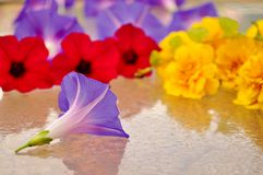 Colorful flower heads on a wet glass. Royalty Free Stock Photo