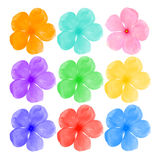 Colorful of flower isolate on white background Royalty Free Stock Image