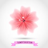 Colorful Flower Isolated on White Stock Photography
