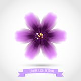 Colorful Flower Isolated on White Royalty Free Stock Images