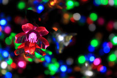 Colorful Flower Of Light Royalty Free Stock Image