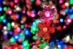 Colorful Flower Of Light Stock Images