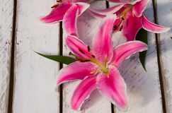 Colorful Flower Lily. Lily on a wooden background Royalty Free Stock Images