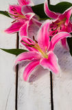 Colorful Flower Lily. Lily on a wooden background Royalty Free Stock Photo