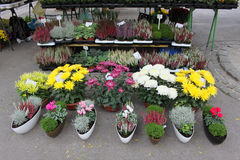 Colorful flower market Stock Image