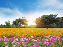 Colorful flower meadow and blue sky. With white cloud Stock Photography
