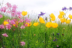 Colorful flower meadow Stock Photos