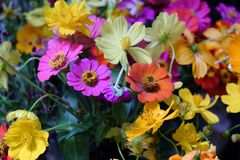 Colorful flower. In the morning Stock Photography
