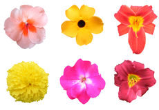 Colorful Flower Pack. Six different colorful flowers to choose from isolated on a white background Stock Image