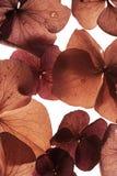Colorful flower petal closeup Stock Image