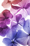 Colorful flower petal closeup Stock Images