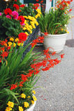 Colorful flower planter. S on patio Stock Photos