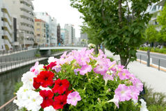 Colorful flower and plants with city building background. Colorful flower and plants with the city building background royalty free stock images