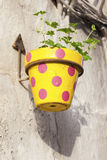 Colorful flower pot Stock Photography