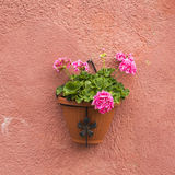 Colorful flower pot on wall Stock Photo