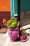 Flower Pots on Samos Royalty Free Stock Photo