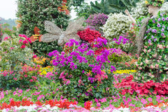 Colorful flower show Royalty Free Stock Photography
