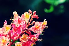 Colorful flower in spring stock photography