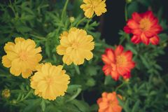Colorful flower in summer. City park Stock Photography